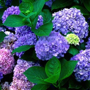 Luleborë